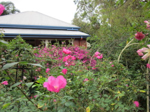 South Rose Garden. Rose Beauty of Glenhurst