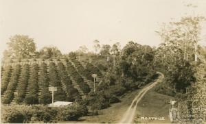 Montville Orchard 1939